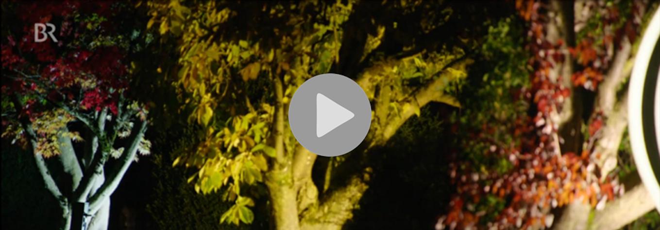 Lichtverschmutzung BR Unkraut Paten der Nacht